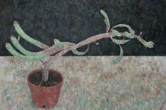 Euphorbia Mammilaria